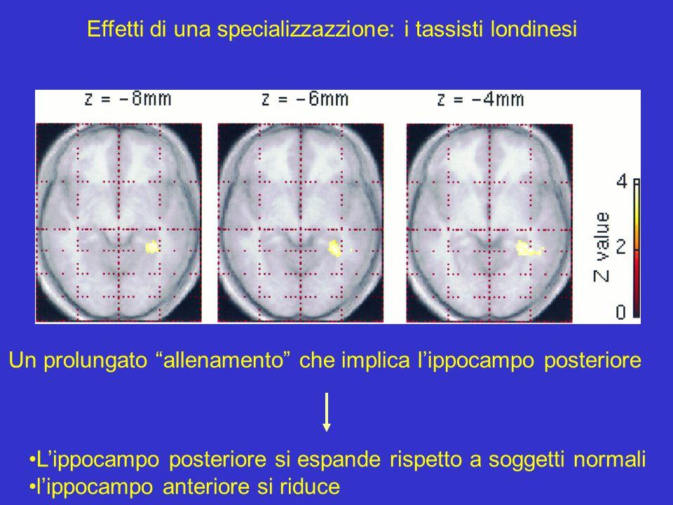 Effetti di una specializzazzione: i tassisti londinesi Un prolungato allenamento che implica lippocampo posteriore Lippocampo posteriore si espande ri