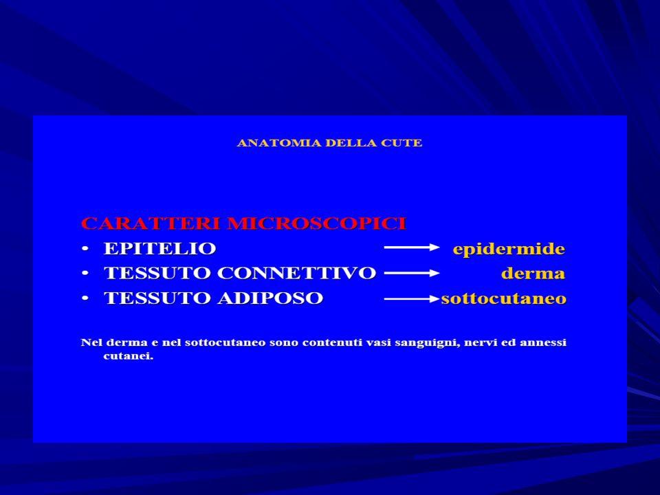 Pelle e conflitti psicosomatici Cervelletto: da ambiente liquido a terrestre...
