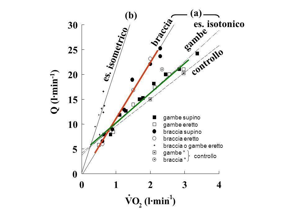 DATI PRELIMINARI E PROSPETTIVE DI STUDIO -Studio della componente lenta della cinetica VO2-on -Studio della cinetica VO2-off -Determinazione della massima potenza meccanica (picco e media) e della massima capacità lattacida durante esercizi di tipo tutto-fuori eseguiti con le braccia -Determinazione del grado di affaticamento muscolare durante esercizi sopramassimali ripetuti