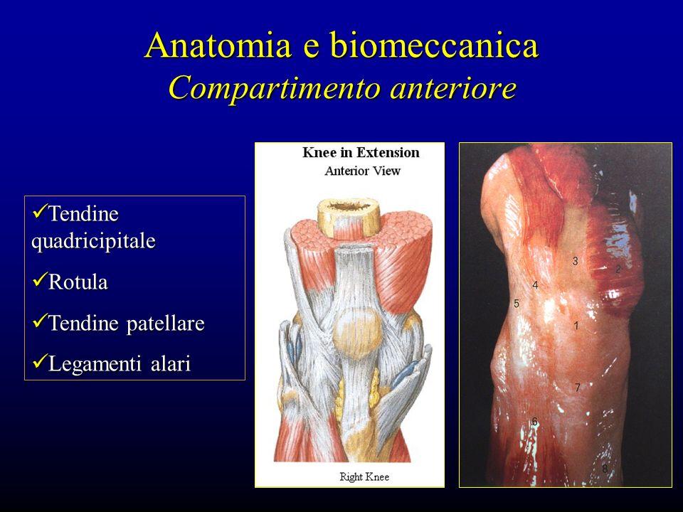 Anatomia e biomeccanica Compartimento anteriore Tendine quadricipitale Tendine quadricipitale Rotula Rotula Tendine patellare Tendine patellare Legame
