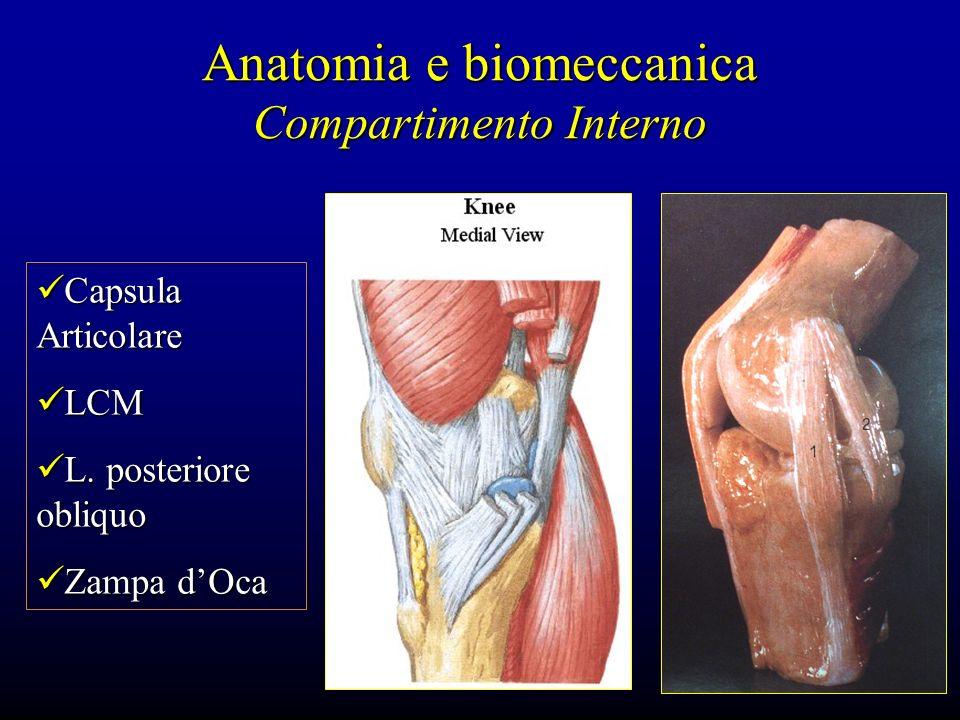 Anatomia e biomeccanica Compartimento Interno Capsula Articolare Capsula Articolare LCM LCM L. posteriore obliquo L. posteriore obliquo Zampa dOca Zam