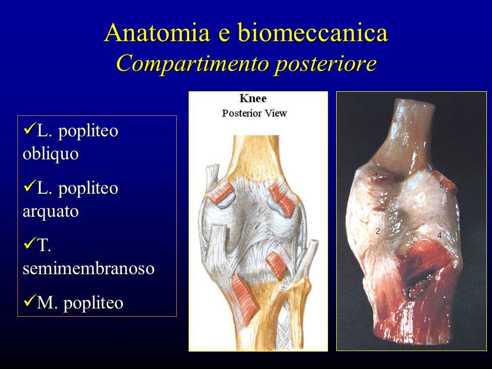 Anatomia e biomeccanica Compartimento posteriore L. popliteo obliquo L. popliteo obliquo L. popliteo arquato L. popliteo arquato T. semimembranoso T.