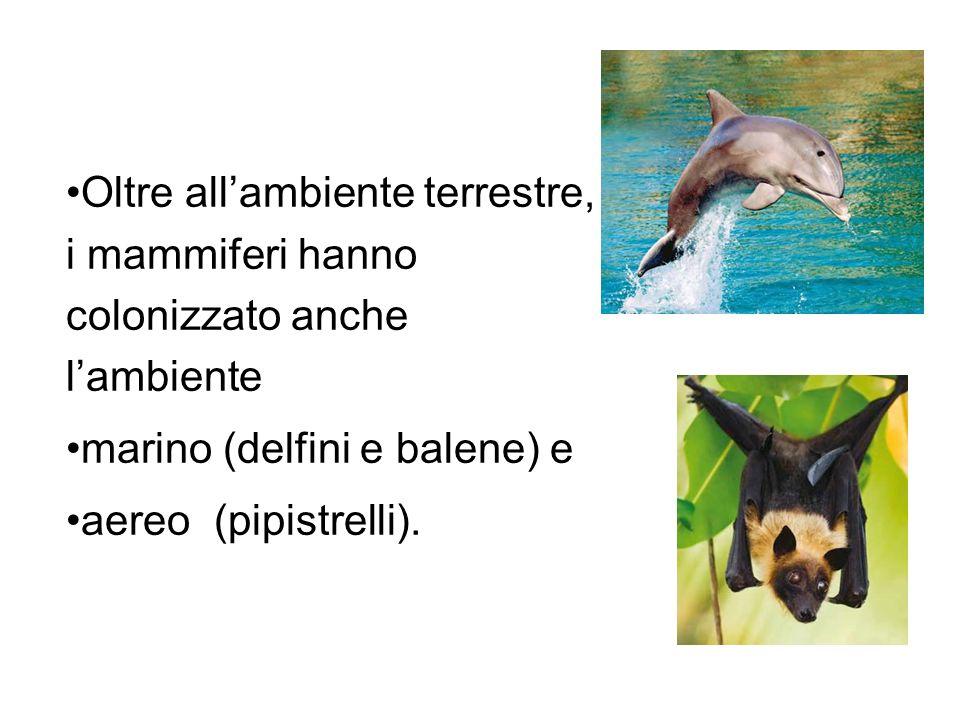 Oltre allambiente terrestre, i mammiferi hanno colonizzato anche lambiente marino (delfini e balene) e aereo (pipistrelli).