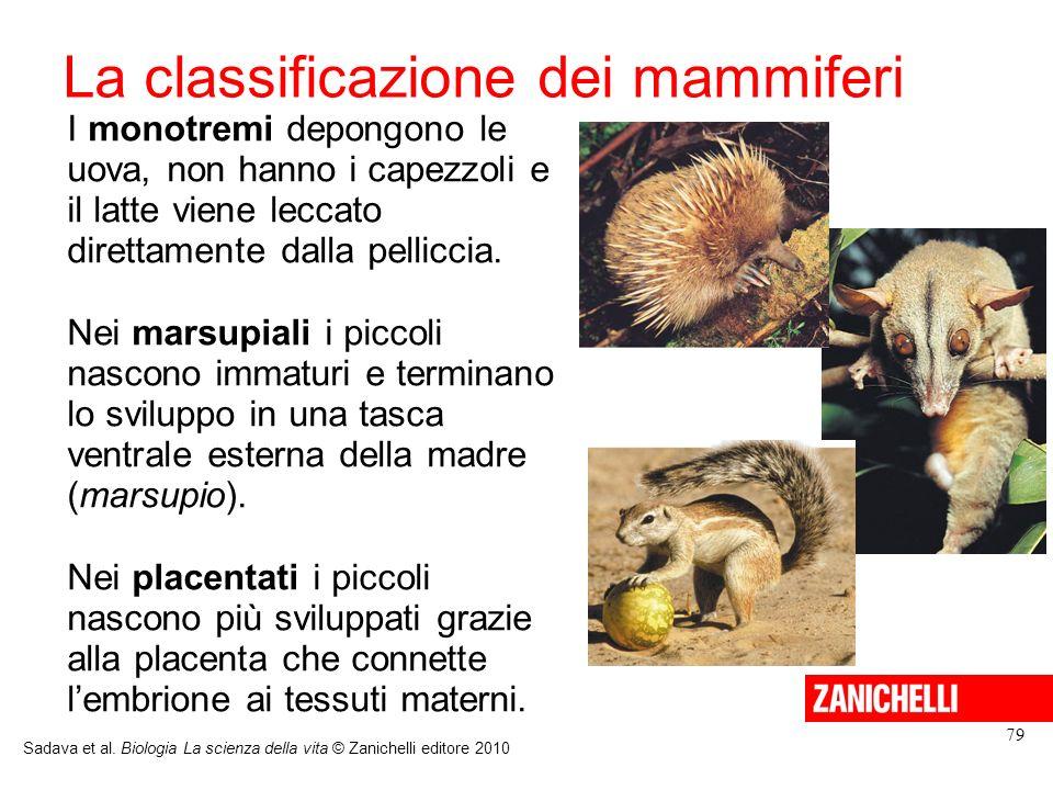 La classificazione dei mammiferi I monotremi depongono le uova, non hanno i capezzoli e il latte viene leccato direttamente dalla pelliccia. Nei marsu