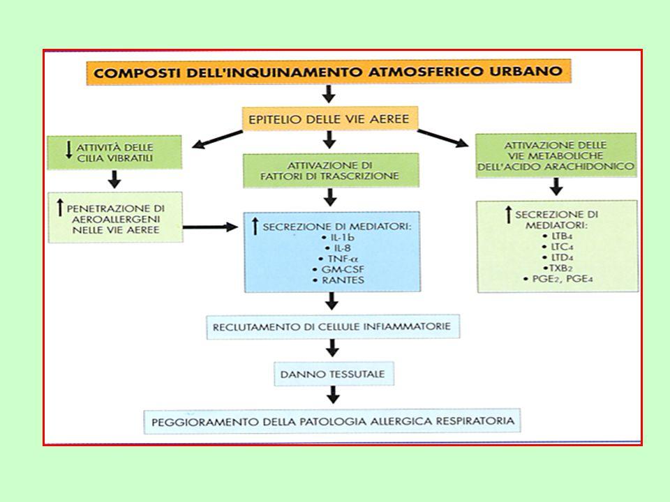 PENETRAZIONE DEGLI INQUINANTI A LIVELLO RESPIRATORIO §I gas (CO,NOx,et.) possono giungere direttamente, insieme allaria inspirata,a livello alveolare,da cui possono eventualmente passare nel sangue.