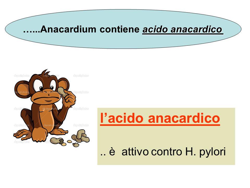 lacido anacardico.. è attivo contro H. pylori acido anacardico …...Anacardium contiene acido anacardico