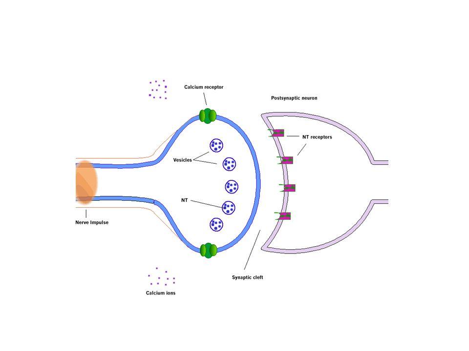 LA VERATRIDINA, APPLICATA A MIOCITI, HA UNA DUPLICE AZIONE SUI CANALI DEL SODIO A SECONDA DELLA CONCENTRAZIONE: ALLA CONCENTRAZIONE DI 1-10 microM li stimola (attivandoli) Mentre a concentrazione > or =30 microM li inibisce dimostrazione dellinversione delleffetto: veratridina