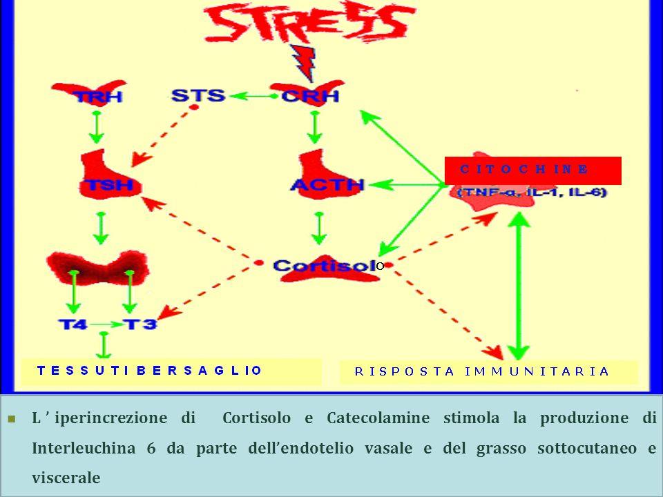 Liperincrezione di Cortisolo e Catecolamine stimola la produzione di Interleuchina 6 da parte dellendotelio vasale e del grasso sottocutaneo e viscera