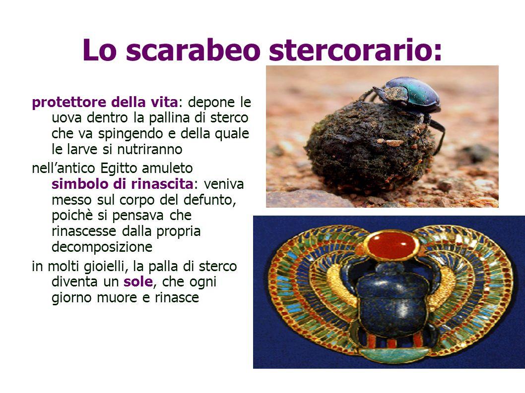 Lo scarabeo stercorario: protettore della vita: depone le uova dentro la pallina di sterco che va spingendo e della quale le larve si nutriranno nella
