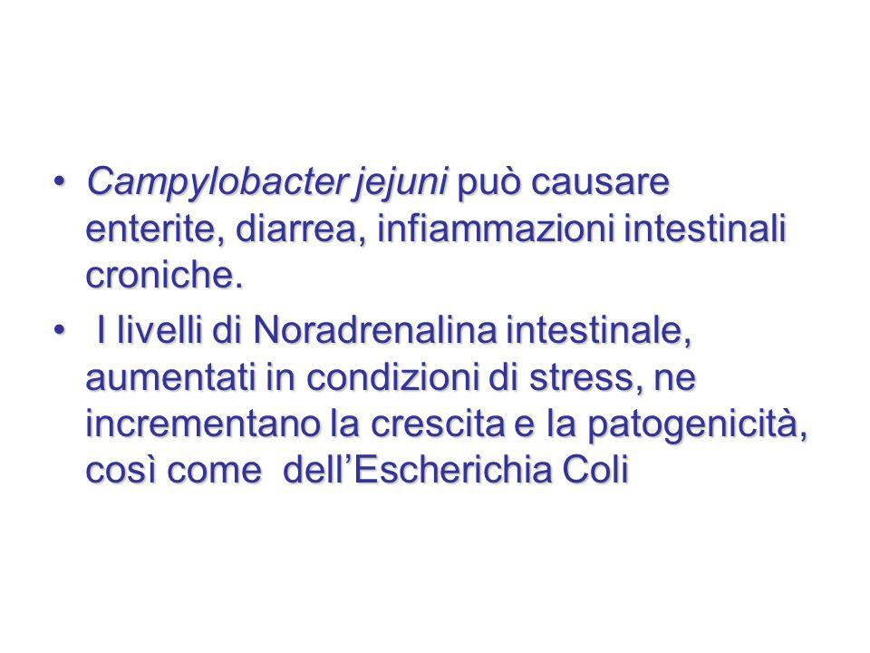 Campylobacter jejuni può causare enterite, diarrea, infiammazioni intestinali croniche.Campylobacter jejuni può causare enterite, diarrea, infiammazio