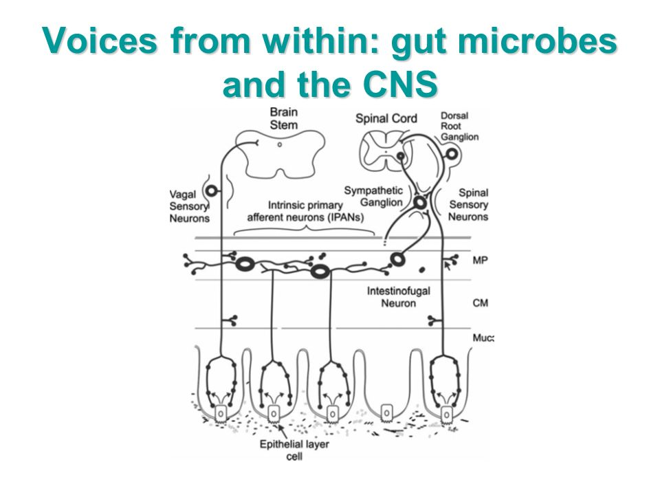 Voices from within: gut microbes and the CNS