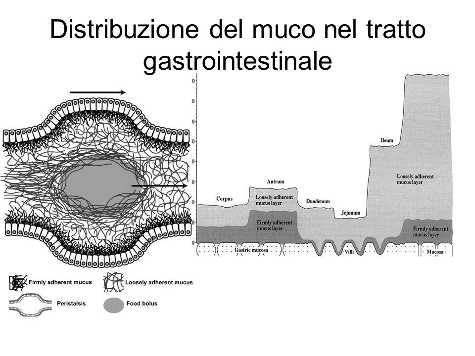 Distribuzione del muco nel tratto gastrointestinale