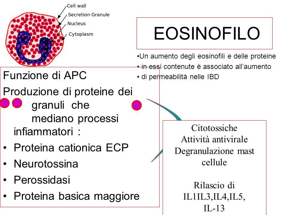 EOSINOFILO Funzione di APC Produzione di proteine dei granuli che mediano processi infiammatori : Proteina cationica ECP Neurotossina Perossidasi Prot