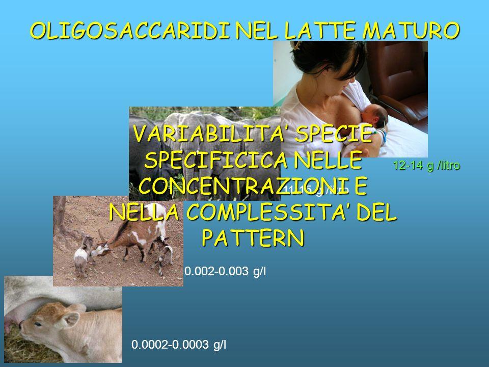 0.0002-0.0003 g/l 12-14 g /litro OLIGOSACCARIDI NEL LATTE MATURO 0.002-0.003 g/l 11-15 g /litro VARIABILITA SPECIE SPECIFICICA NELLE CONCENTRAZIONI E