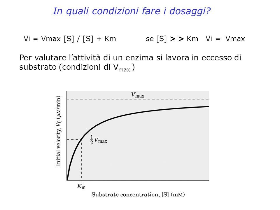 Vi = Vmax [S] / [S] + Km se [S] > > Km Vi = Vmax In quali condizioni fare i dosaggi? Per valutare lattività di un enzima si lavora in eccesso di subst
