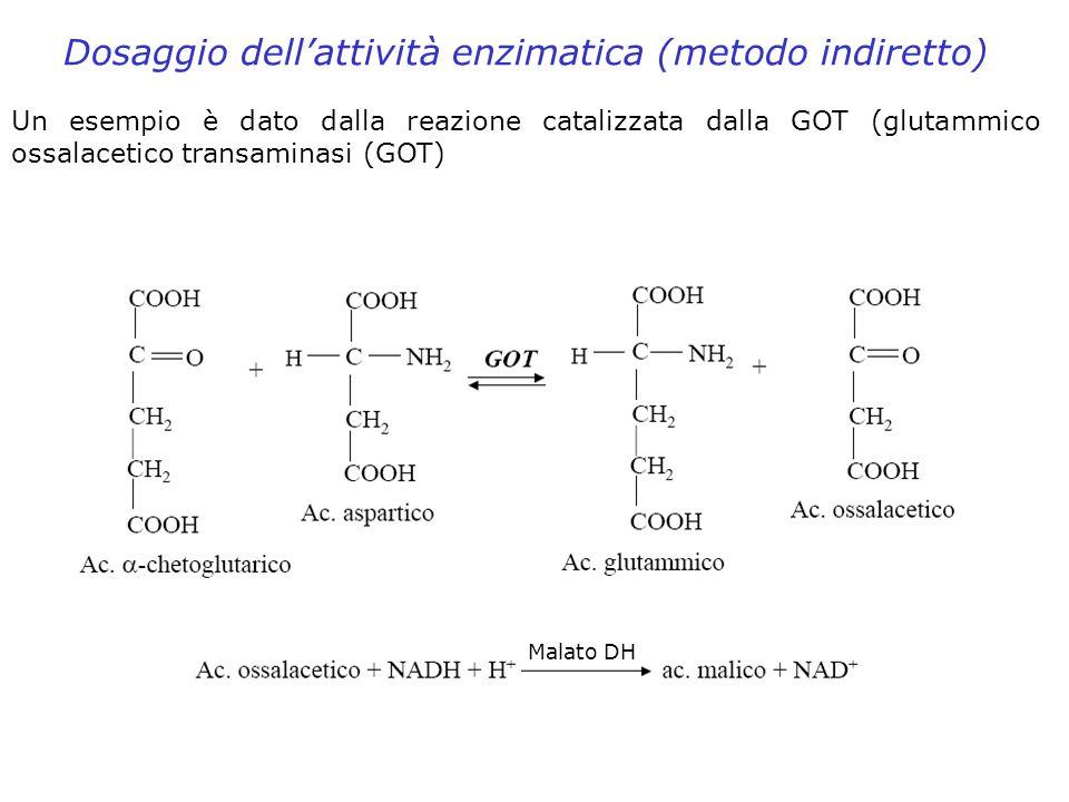 Dosaggio dellattività enzimatica (metodo indiretto) Un esempio è dato dalla reazione catalizzata dalla GOT (glutammico ossalacetico transaminasi (GOT)