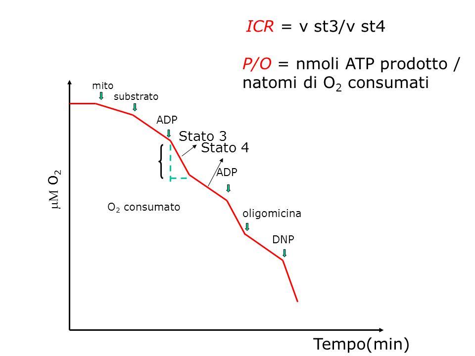 O 2 Tempo(min) mito substrato ADP oligomicina DNP Stato 4 Stato 3 ICR = v st3/v st4 O 2 consumato P/O = nmoli ATP prodotto / natomi di O 2 consumati