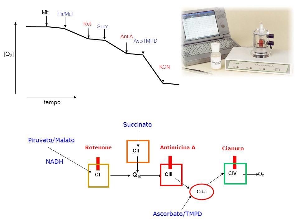 Piruvato/MalatoNADH Antimicina AAscorbato/TMPD Cianuro RotenoneSuccinato CIII O2O2 Cit.c CI CIV Q 10 CII [O 2 ] tempo Pir/Mal Succ Asc/TMPD Mit Rot An