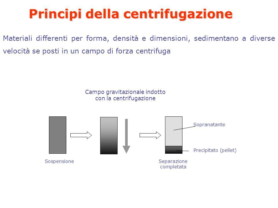 Principi della centrifugazione Materiali differenti per forma, densità e dimensioni, sedimentano a diverse velocità se posti in un campo di forza centrifuga Sospensione Campo gravitazionale indotto con la centrifugazione Precipitato (pellet) Sopranatante Separazione completata