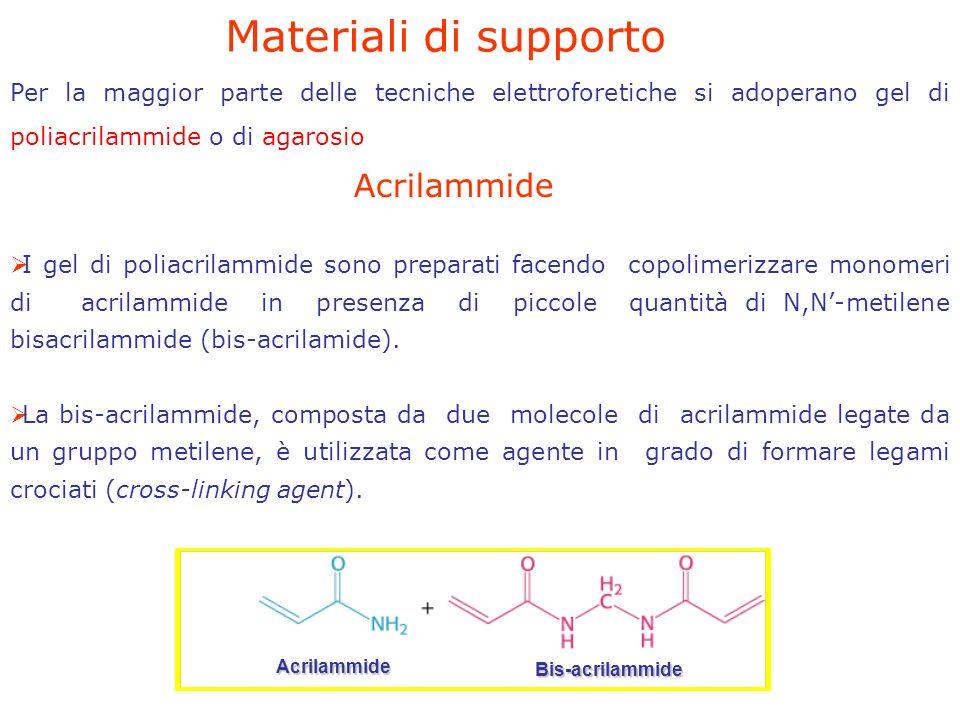 Per la maggior parte delle tecniche elettroforetiche si adoperano gel di poliacrilammide o di agarosio Acrilammide Bis-acrilammide Materiali di supporto I gel di poliacrilammide sono preparati facendo copolimerizzare monomeri di acrilammide in presenza di piccole quantità di N,N-metilene bisacrilammide (bis-acrilamide).
