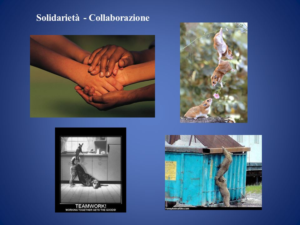 Solidarietà - Collaborazione