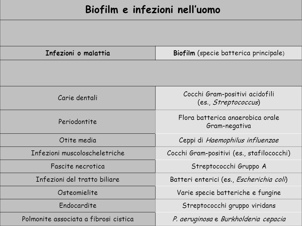 Biofilm e infezioni nelluomo Infezioni o malattiaBiofilm (specie batterica principale ) Carie dentali Cocchi Gram-positivi acidofili (es., Streptococcus) Periodontite Flora batterica anaerobica orale Gram-negativa Otite mediaCeppi di Haemophilus influenzae Infezioni muscoloscheletricheCocchi Gram-positivi (es., stafilococchi) Fascite necroticaStreptococchi Gruppo A Infezioni del tratto biliareBatteri enterici (es., Escherichia coli) OsteomieliteVarie specie batteriche e fungine EndocarditeStreptococchi gruppo viridans Polmonite associata a fibrosi cisticaP.
