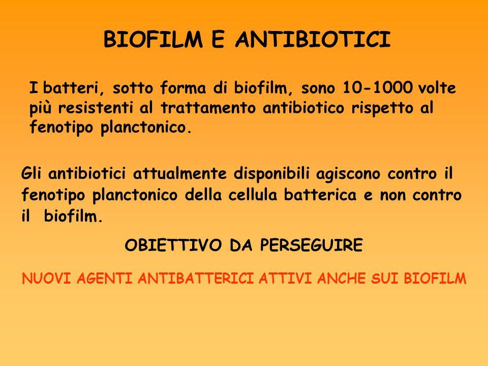 BIOFILM E ANTIBIOTICI I batteri, sotto forma di biofilm, sono 10-1000 volte più resistenti al trattamento antibiotico rispetto al fenotipo planctonico.