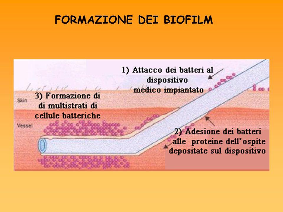 L adesione dei batteri alla superficie dipende: Proteine di superficie del batterio Tipo e natura del dispositivo Trattato o non con rivestimento idrofilo o idrofobo Presenza di microfratture e microcavità Proteine dellospite
