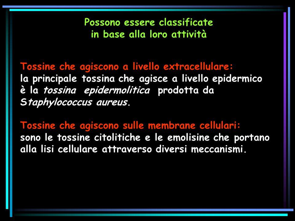 Possono essere classificate in base alla loro attività Tossine che agiscono a livello extracellulare: la principale tossina che agisce a livello epidermico è la tossina epidermolitica prodotta da Staphylococcus aureus.