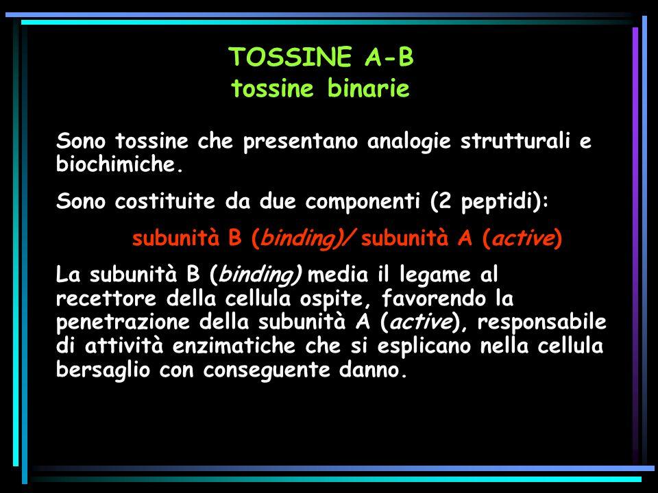 Sono tossine che presentano analogie strutturali e biochimiche.