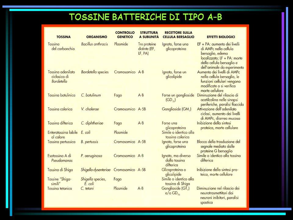 TOSSINE BATTERICHE DI TIPO A–B