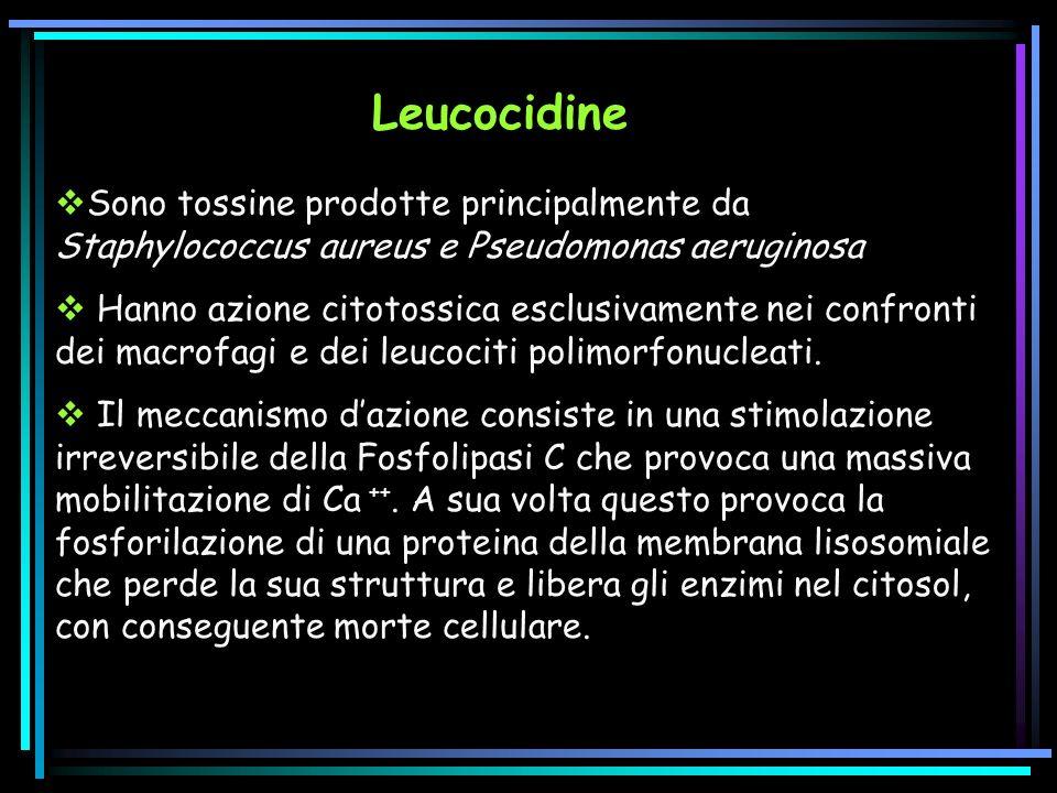 Sono tossine prodotte principalmente da Staphylococcus aureus e Pseudomonas aeruginosa Hanno azione citotossica esclusivamente nei confronti dei macrofagi e dei leucociti polimorfonucleati.