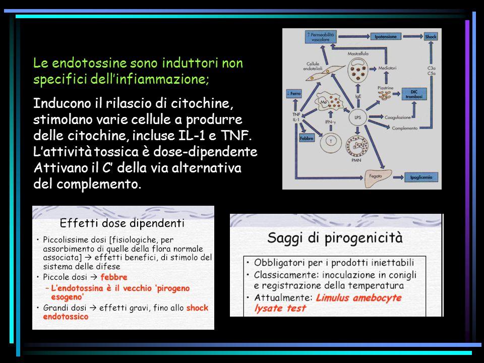 Le endotossine sono induttori non specifici dellinfiammazione; Inducono il rilascio di citochine, stimolano varie cellule a produrre delle citochine, incluse IL-1 e TNF.