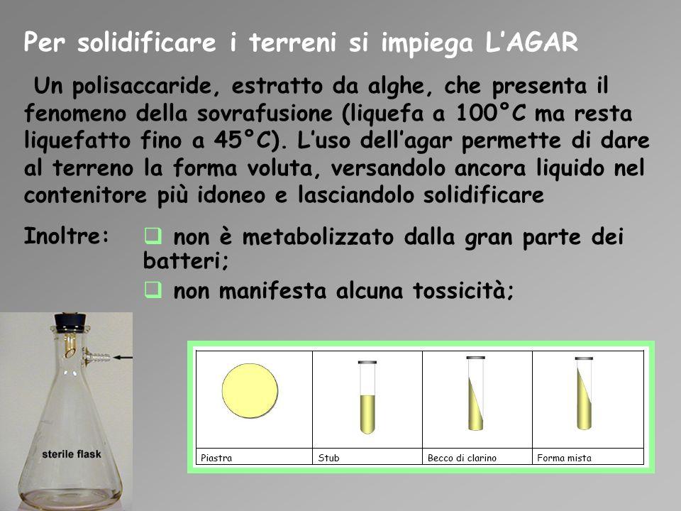 Per solidificare i terreni si impiega LAGAR Un polisaccaride, estratto da alghe, che presenta il fenomeno della sovrafusione (liquefa a 100°C ma resta