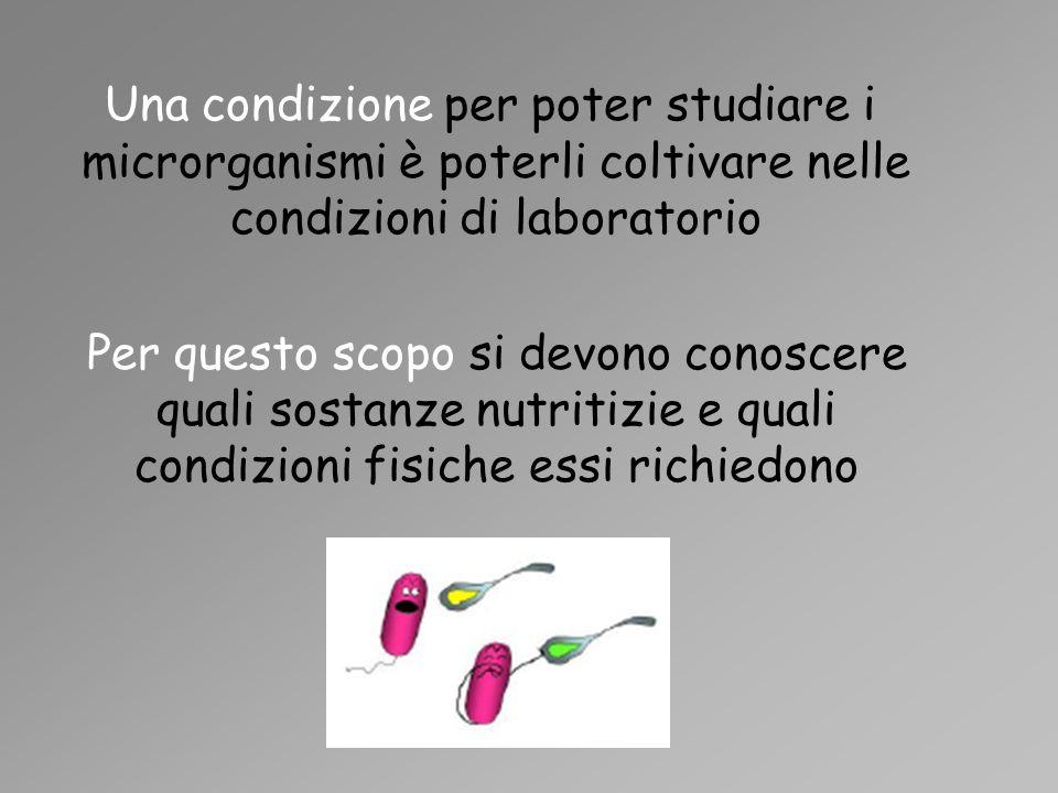 Una condizione per poter studiare i microrganismi è poterli coltivare nelle condizioni di laboratorio Per questo scopo si devono conoscere quali sosta