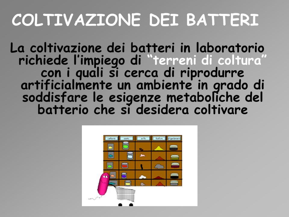 COLTIVAZIONE DEI BATTERI La coltivazione dei batteri in laboratorio richiede limpiego di terreni di coltura con i quali si cerca di riprodurre artific