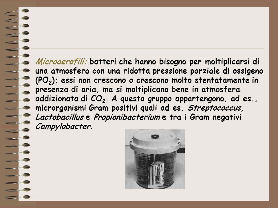 Microaerofili: batteri che hanno bisogno per moltiplicarsi di una atmosfera con una ridotta pressione parziale di ossigeno (PO 2 ); essi non crescono