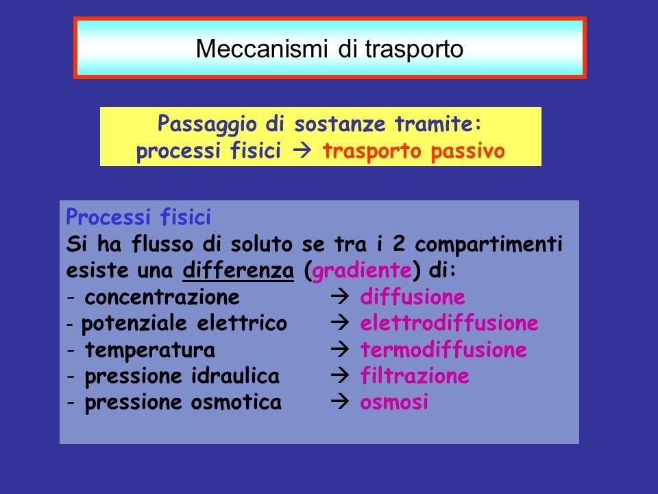 Meccanismi di trasporto Passaggio di sostanze tramite: processi fisici trasporto passivo Processi fisici Si ha flusso di soluto se tra i 2 compartimen