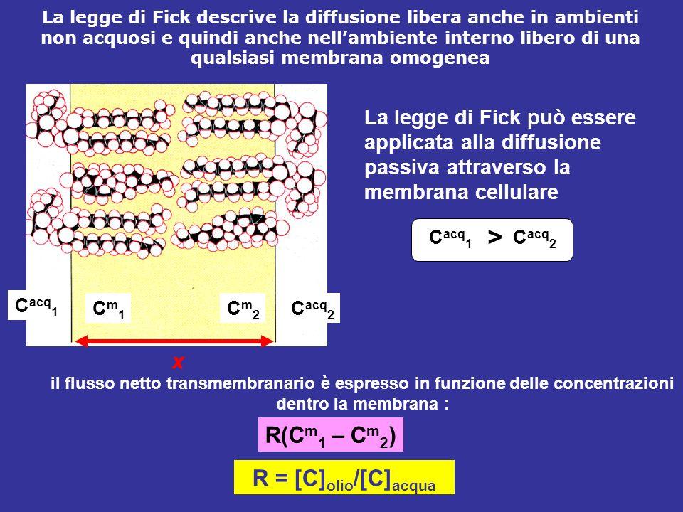 La legge di Fick può essere applicata alla diffusione passiva attraverso la membrana cellulare C acq 1 Cm1Cm1 Cm2Cm2 C acq 2 x C acq 1 C acq 2 > R(C m