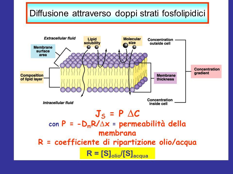 J S = P C con P = -D m R/ x = permeabilità della membrana R = coefficiente di ripartizione olio/acqua R = [S] olio /[S] acqua Diffusione attraverso do