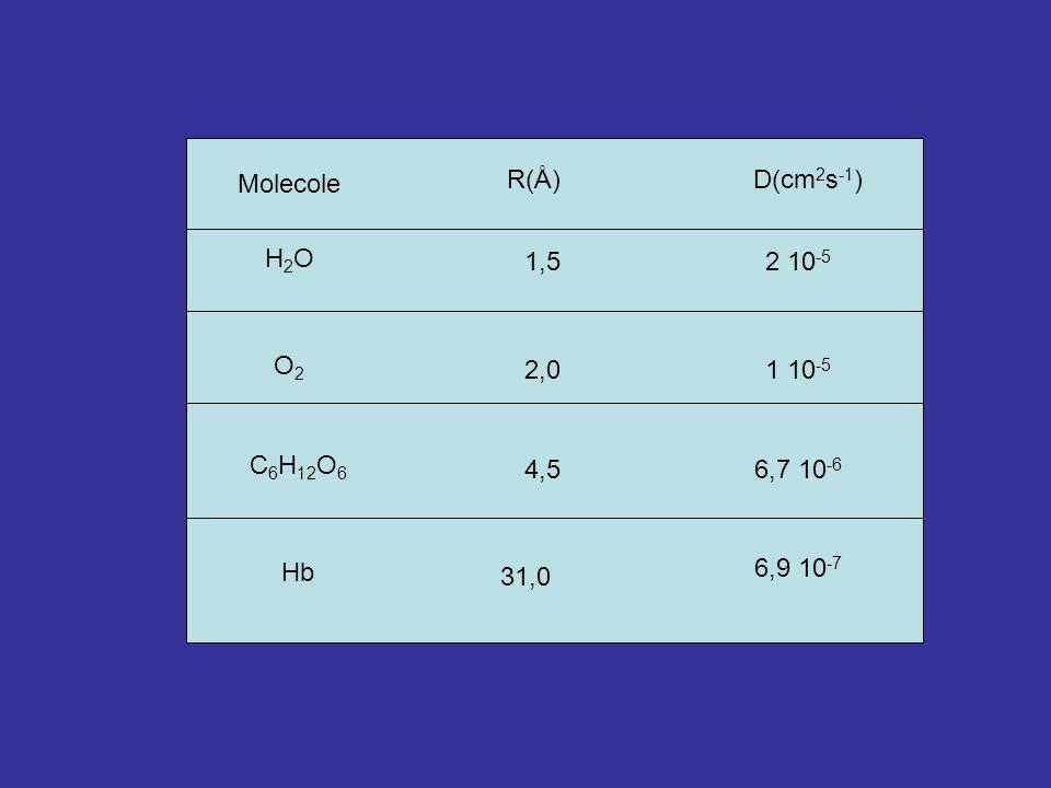 Molecole R(Å)D(cm 2 s -1 ) H2OH2O 1,52 10 -5 O2O2 2,01 10 -5 C 6 H 12 O 6 4,56,7 10 -6 Hb 31,0 6,9 10 -7