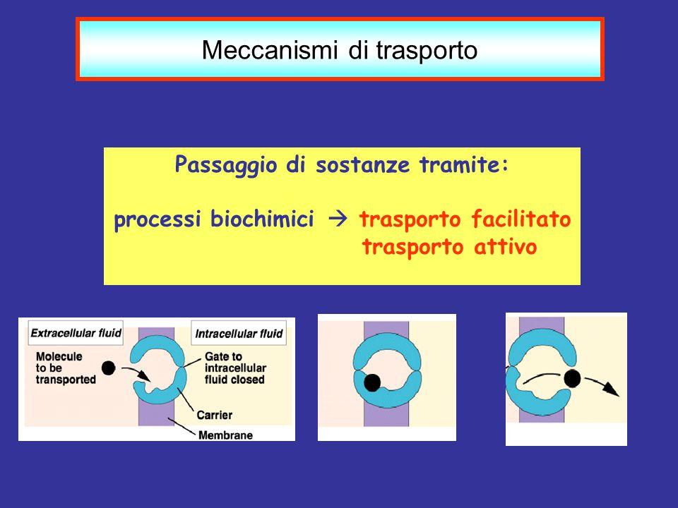 Meccanismi di trasporto Passaggio di sostanze tramite: processi biochimici trasporto facilitato trasporto attivo