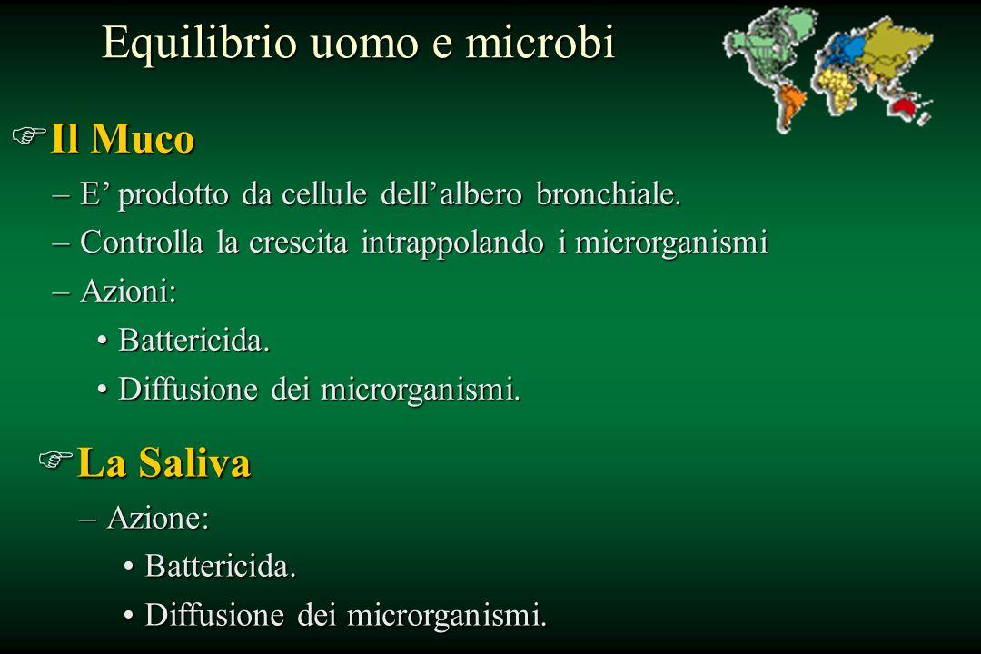 Equilibrio uomo e microbi FIl Muco –E prodotto da cellule dellalbero bronchiale. –Controlla la crescita intrappolando i microrganismi –Azioni: Batteri