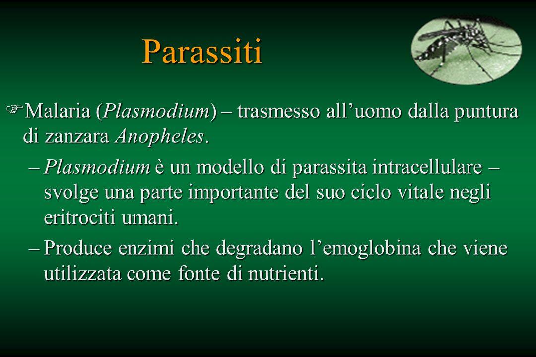 Parassiti FMalaria (Plasmodium) – trasmesso alluomo dalla puntura di zanzara Anopheles. –Plasmodium è un modello di parassita intracellulare – svolge