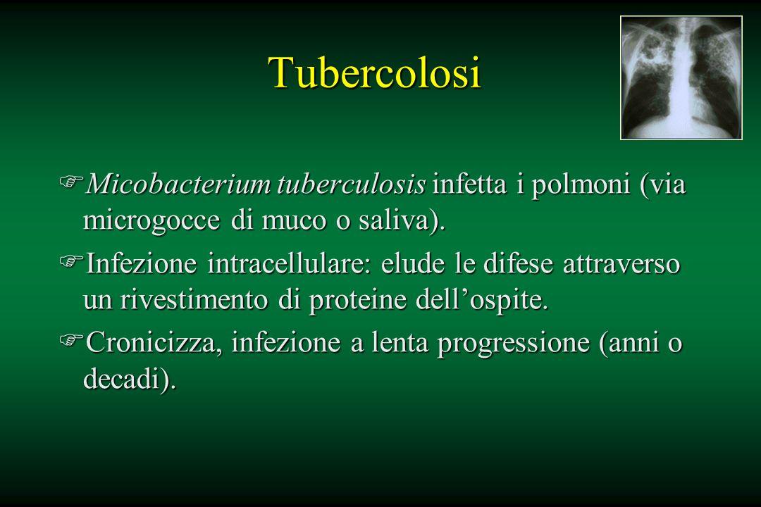 Tubercolosi FMicobacterium tuberculosis infetta i polmoni (via microgocce di muco o saliva). FInfezione intracellulare: elude le difese attraverso un