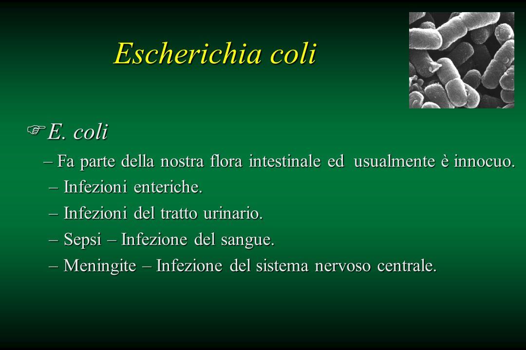 Escherichia coli FE. coli – Fa parte della nostra flora intestinale ed usualmente è innocuo. – Fa parte della nostra flora intestinale ed usualmente è