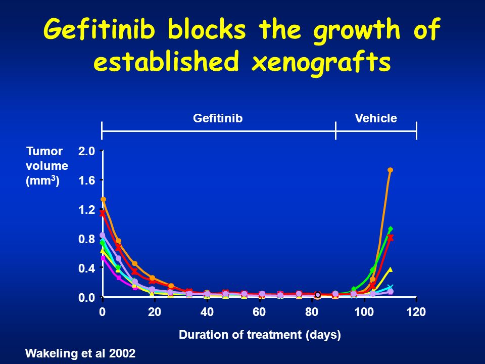 Gefitinib blocks the growth of established xenografts 0.0 0.4 0.8 1.2 1.6 2.0 VehicleGefitinib Tumor volume (mm 3 ) Duration of treatment (days) 10080