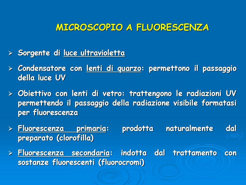 MICROSCOPIO A FLUORESCENZA Sorgente di luce ultravioletta Sorgente di luce ultravioletta Condensatore con lenti di quarzo: permettono il passaggio del
