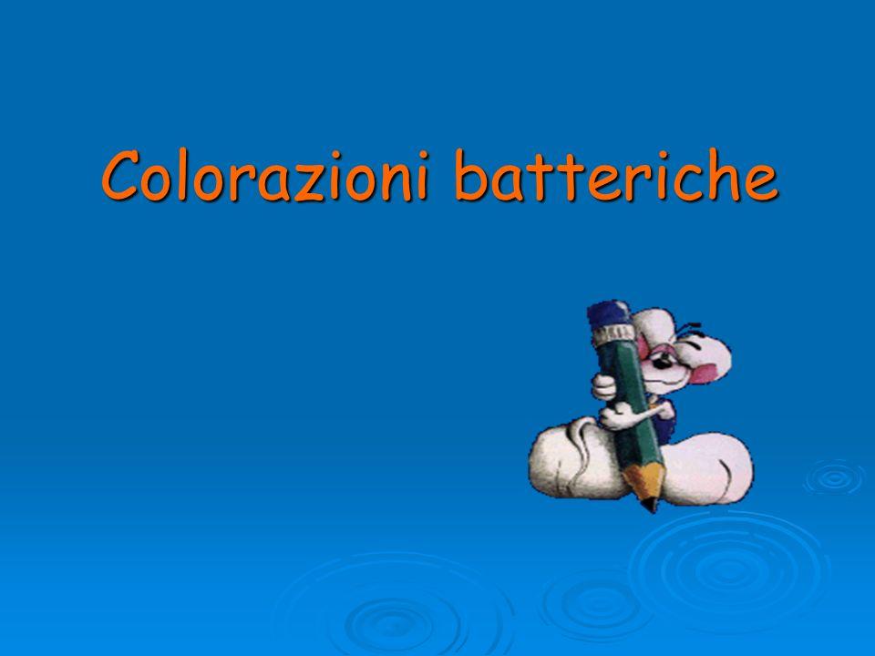 Colorazioni batteriche
