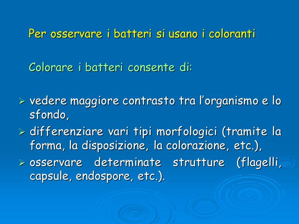 Per osservare i batteri si usano i coloranti Per osservare i batteri si usano i coloranti Colorare i batteri consente di: Colorare i batteri consente